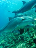 5 Amazing Places You Can Swim with Dolphins