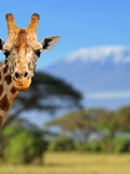 21 Best Places to Visit in Africa Before You Die