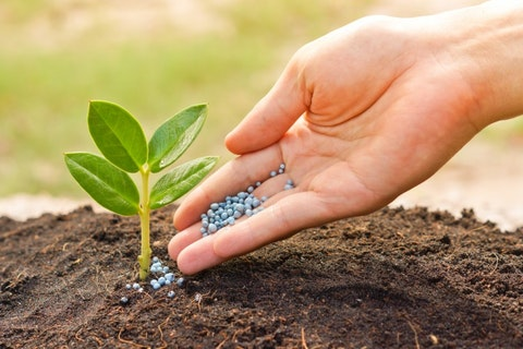 plant, tree, nutrients, nitrogen, soil, concept, farming, k, young, hand, canoodling, natural, grow, agriculture, save, green, spring, conservation, organic, growing, wheat,