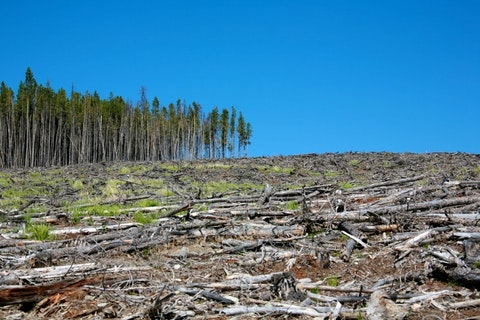 Countries with the Highest Deforestation Rates in the World