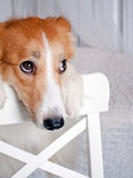 10 Easiest Dogs to Train And Take Care of