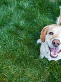 Top 11 Dog Breeds That Don't Shed