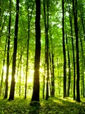11 Countries With The Most Forests In The World
