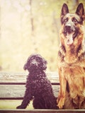 10 Easiest Dog Breeds to Train in The World