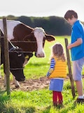 6 Easiest Cows To Raise With Your Children