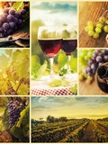 7 Countries That Make the Best Wine in the World