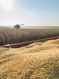 10 Countries That Export the Most Corn in the World