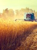 8 Countries that Produce the Most Wheat in the World