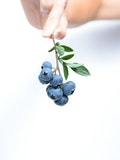 25 Biggest Producers of Blueberries In The World