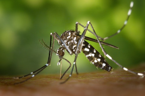 Top 10 Countries With Zika Virus in Americas