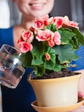 17 Easiest Indoor Plants to Grow from Seed