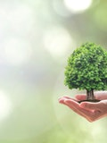 11 Best Climate Change Charities in US, Canada, UK, and Australia