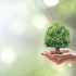 Ecology & Environment, Inc. (EEI): Artko Capital Thinks It Is Heading For A Sale