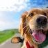 10 Best Stocks for Animal Lovers