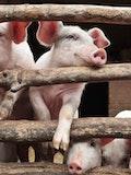 11 Most Profitable Livestock to Raise in 2017