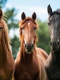 10 Countries that Have the Most Horses in the World