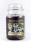 17 Best Selling Yankee Candle Scents in 2020