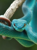 10 Websites to Buy Venomous Snakes Cheap With Free Shipping