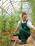 Top 8 Most Profitable Specialty Plants to Grow in a Greenhouse