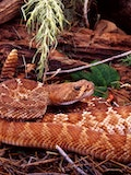 20 Most Deadliest and Dangerous Snakes In the World