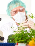 15 Advantages and Disadvantages of Genetically Modified Organisms