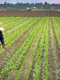 Top 11 Agribusiness Companies In The World