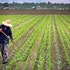 5 Best Agriculture Stocks to Invest In