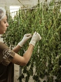15 Most Valuable Weed Companies in the World