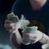 10 Best Safe Blue Chip Dividend Stocks