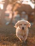 15 Best Dog Breeds for First Time Owners